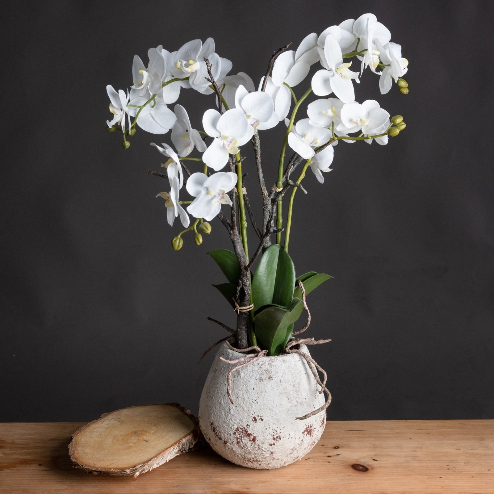 White Orchid Phalaenopsis Plants In Small Stone Pot