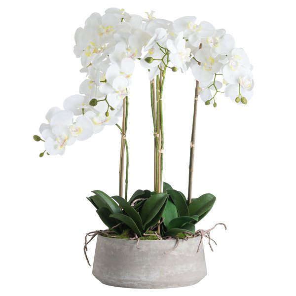 Orchid Plants in Stone Bowl